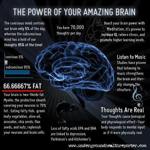 Grăsimile sunt bune pentru creier!