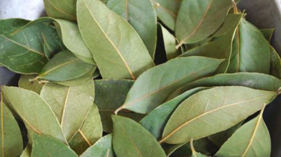 Lucruri mai puțin știute despre frunzele de dafin. Cât de sănătos este consumul lor
