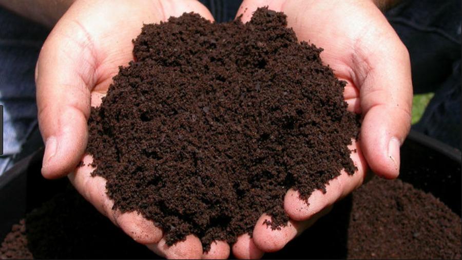 Invata de la un gradinar profesionist – Cum sa folosesti zatul de cafea in gradina