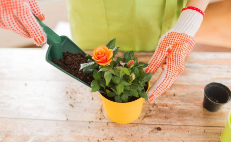 Top 5 sfaturi pentru îngrijirea plantelor la ghiveci