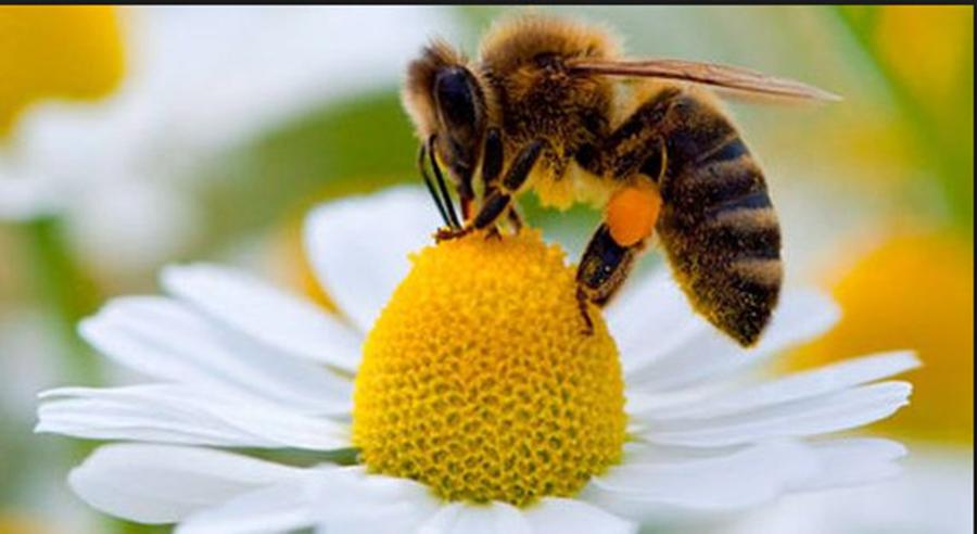 7 lucruri pe care nu le stiai despre viata albinelor