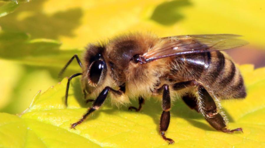 """Tudor Ciuhodaru: """"Intepatura de albina poate fi mortala. Iata 10 lucruri care va pot salva viata"""""""