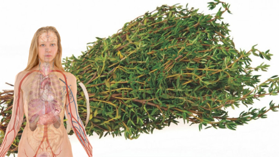 Cimbrul, o planta excelenta pentru sanatatea inimii si a oaselor. Trateaza acneea si ucide bacteriile