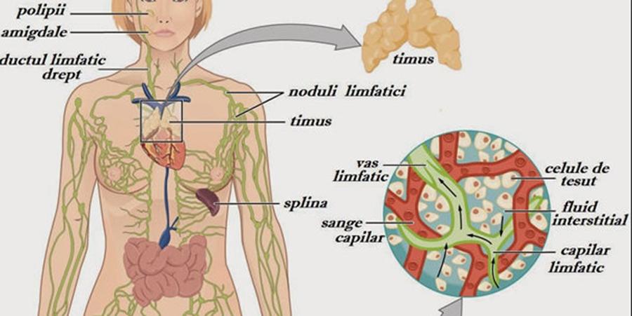 stimularea sistemului limfatic