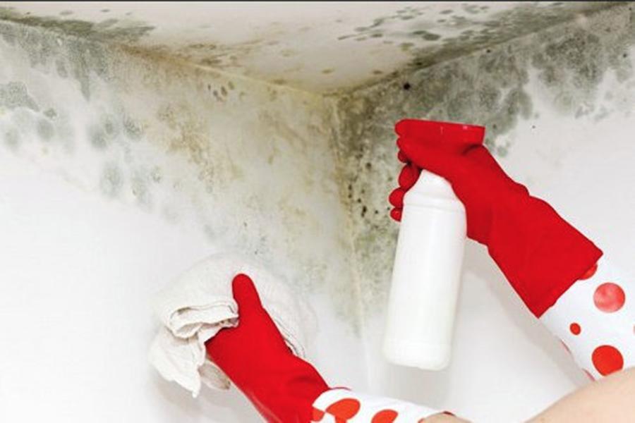 Mucegaiul din locuinte – la ce boli esti expus si cum poti scapa de el