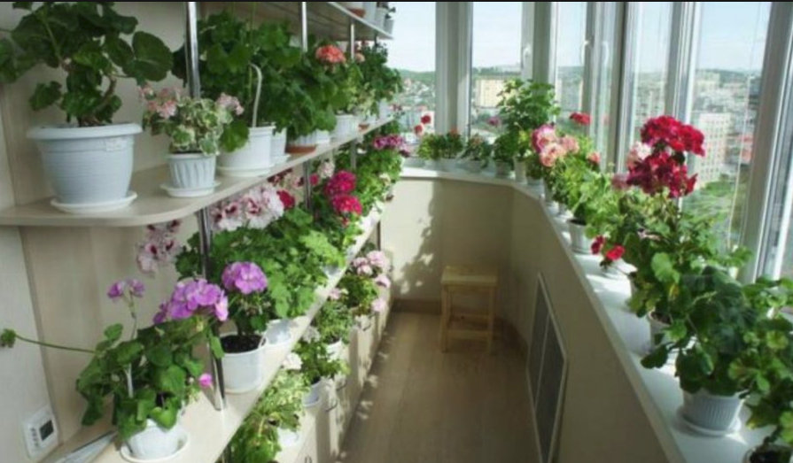 Vă puteți transforma casa într-o adevărată grădină cu flori! Secretul constă în îngrășământul folosit, 9 sfaturi esențiale