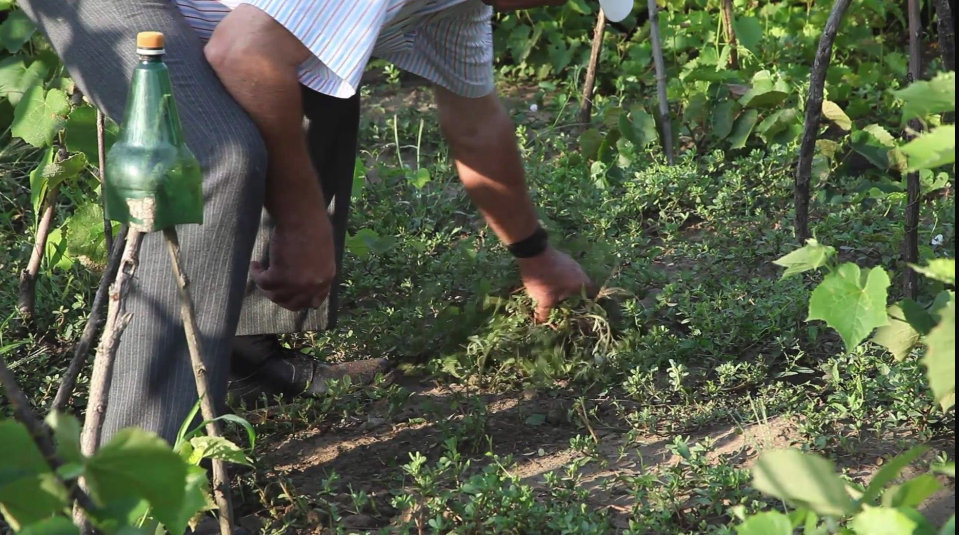 Un bărbat din Botoșani lucra pământul din grădină atunci când a dat peste ceva inspaimantator! A alertat imediat autoritățile
