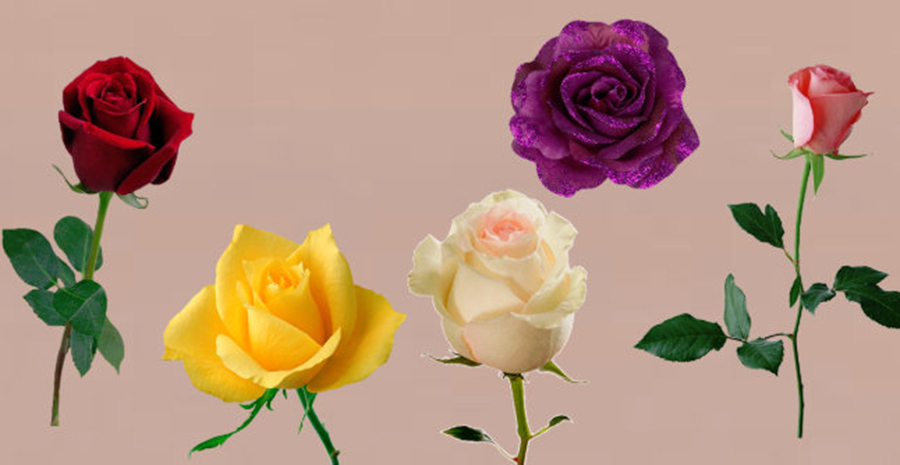 The selected rose carries an important message and knows the answer when your wish is fulfilled. Check?