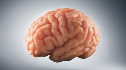 15 fapte amuzante despre creier...