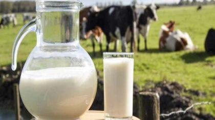 Efectele secundare ale laptelui