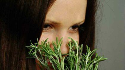 Planta puternica, excelenta pentru creier,...