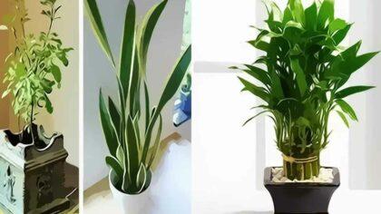 9 plante pentru a aduce...